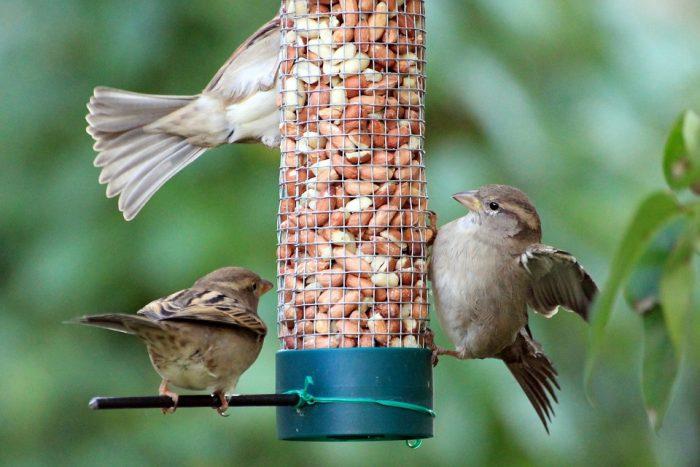 Sådan kan du præge fuglelivet i forårshaven