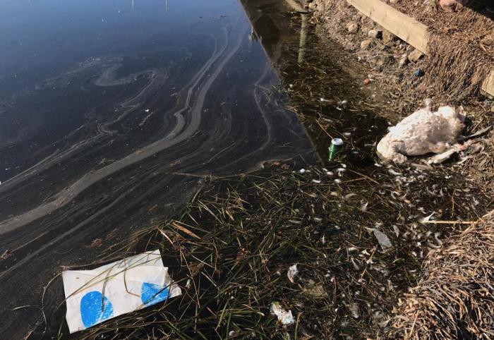 Ny rapport fastslår: Tøj og dæk forurener havene mest