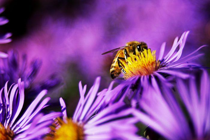 Danske biavlere om ny bekendtgørelse: Stadig problemer trods mere honning på vej
