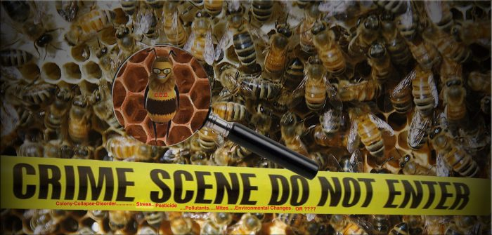 Døde bi-flokke truer erhversbiavler på levebrødet