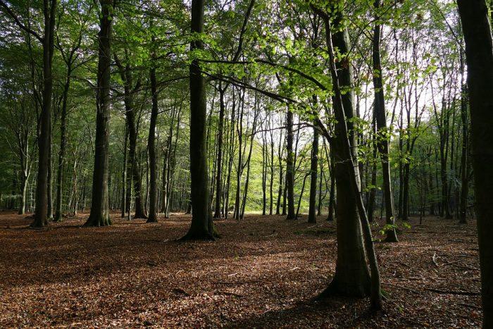 København og Fredensborg skal skabe sundhed i naturen for alle