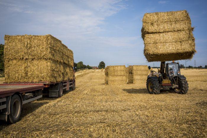 Kæmpe halmballer koster landmænd livet