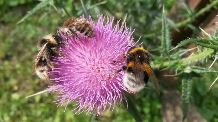 Plant en blomst og red bierne fra massedød
