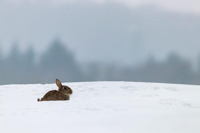 Biolog: Det er ikke kulden men mennesker, der dræber dyrene