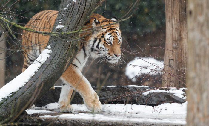 Zoo: Vi ønsker ikke at holde noget skjult for vores gæster