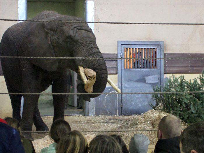 hvor lever elefanter