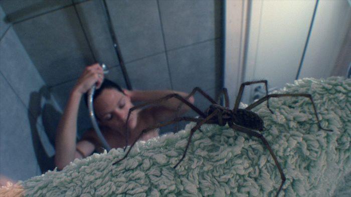Derfor er du bange for edderkopper