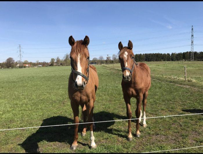 Landmand advarer mod snyd med hestefoder