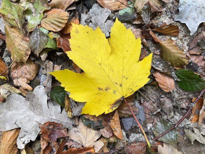 Efterårsblade skaber forsinkelser i togtrafikken – igen