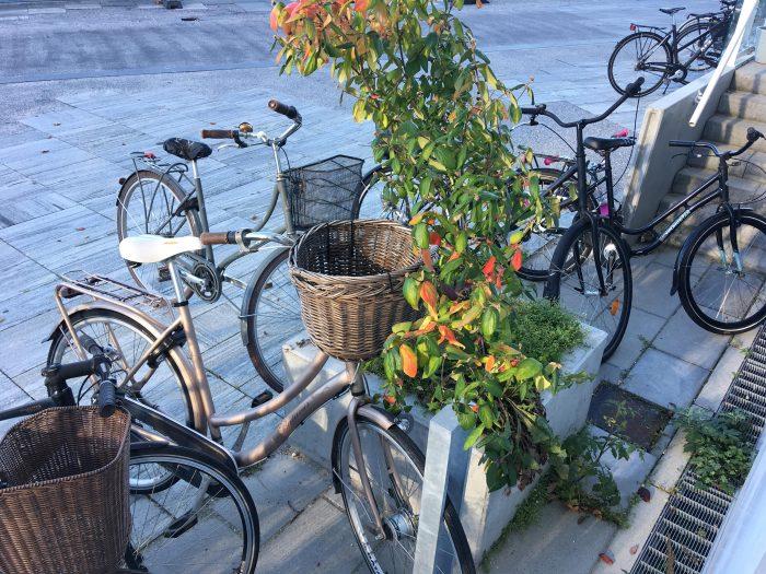 Se tallene: Så mange er tilfredse med cykelforholdene i din kommune