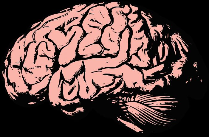 Banebrydende test skal sikre hurtig og målrettet hjælp til folk med hjerneskader