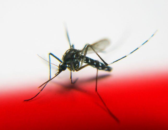 Danske gravide rejser trods zika-fare