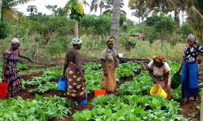 Køn og klimaforandringer: Kvinder i udviklingslande rammes hårdest