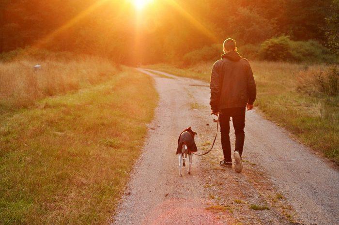 Psykoterapeut: Det kan være værre at miste sit kæledyr end et familiemedlem