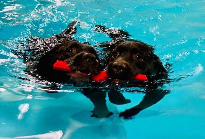 Vovser i vandet er vanvittigt populært