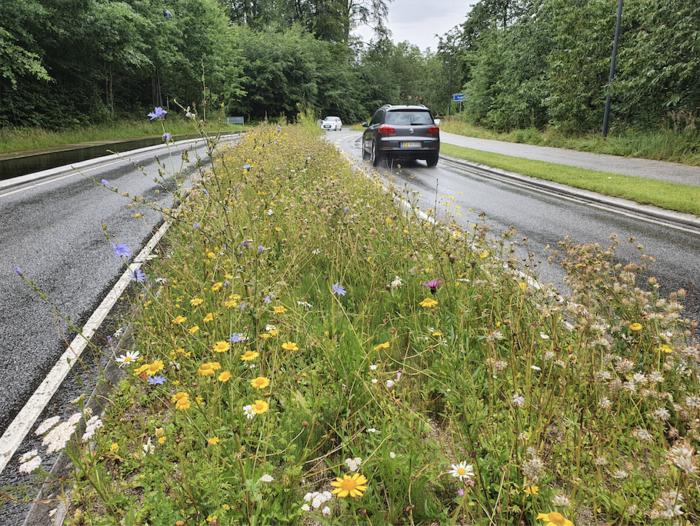 Vild med vildt – Glostrup vil erstatte trimmede græsplæner med vild bevoksning