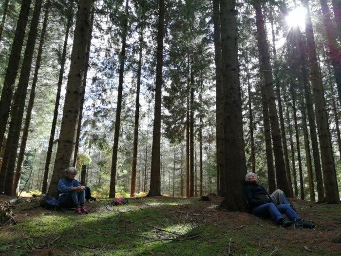 Skovbadning renser ud og holder hjernen frisk